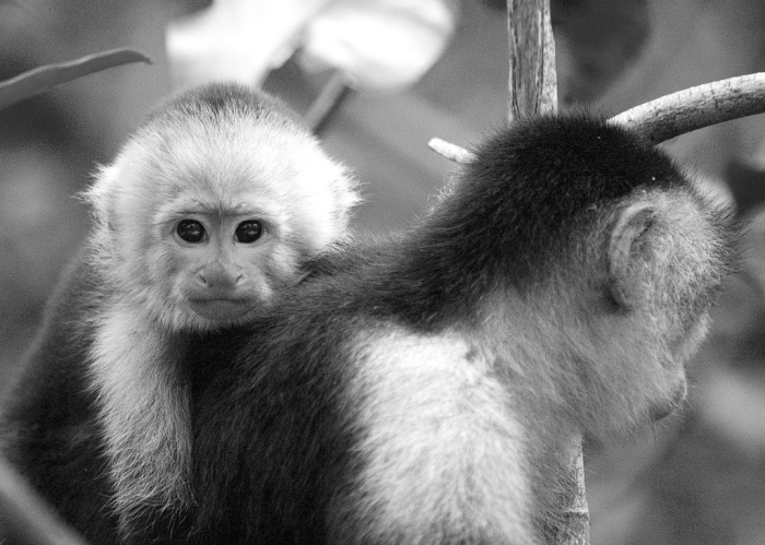 Chester Zoo's new arrival is now three months old. Pic: Sang Trinh- Flickr.